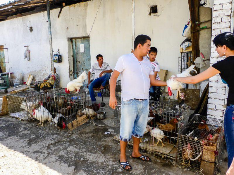 Handel in kippen op de markt in Tashkent, Oezbekistan