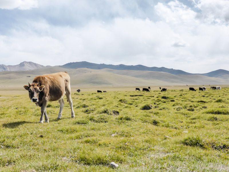 Reizen door Kirgizië in Centraal Azië (28)
