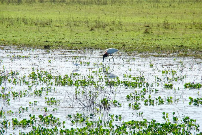 Moerasland in de Pantanal, Brazilië