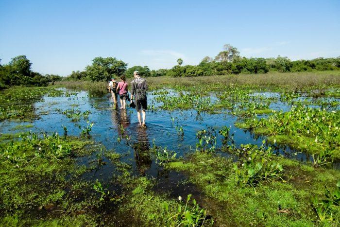 Wandelen door het moeras in de Pantanal, Brazilië