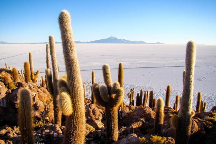 Incahuasi op Salar de Uyuni, Bolivia
