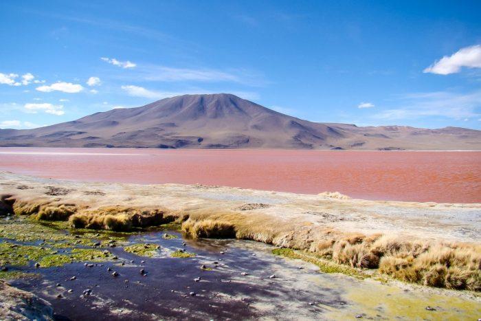 Laguna Colorada bij Uyuni, Bolivia