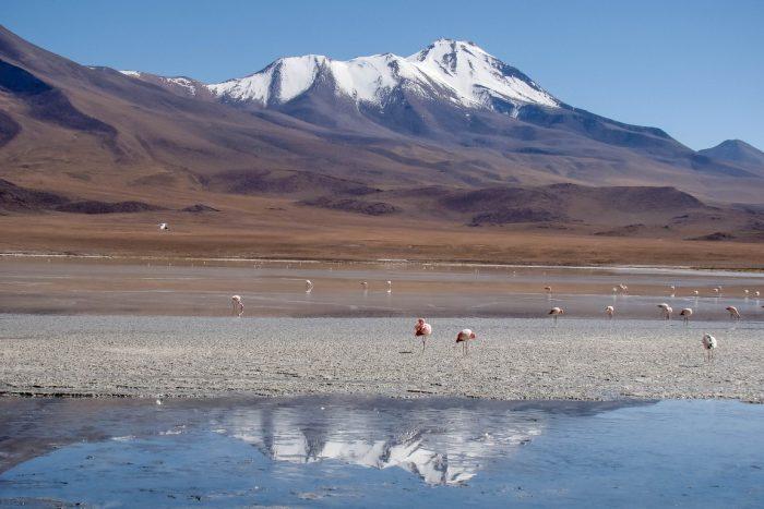 Laguna Hedionda bij Uyuni, Bolivia
