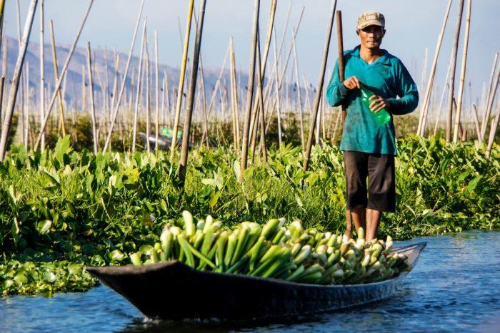 Boot bij floating gardens op Inle Meer in Myanmar