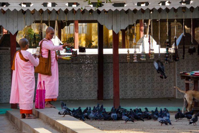 Ladymonks bij Thanboddhay nabij Monywa, Myanmar