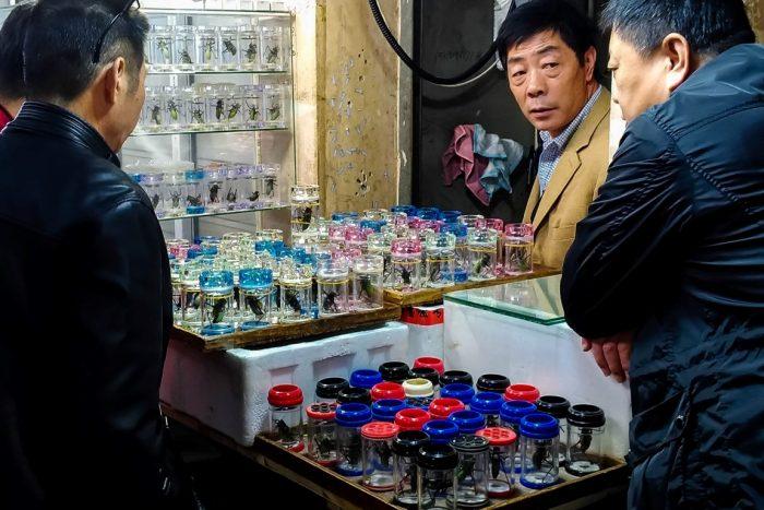 Insectenmarkt in Shanghai, China