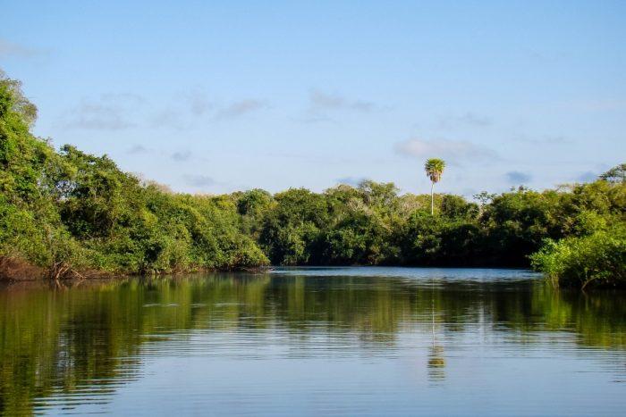 Boottocht in de Pantanal, Brazilië