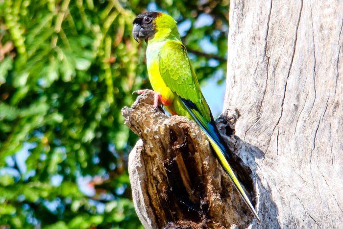 Vogel in de Pantanal, Brazilië