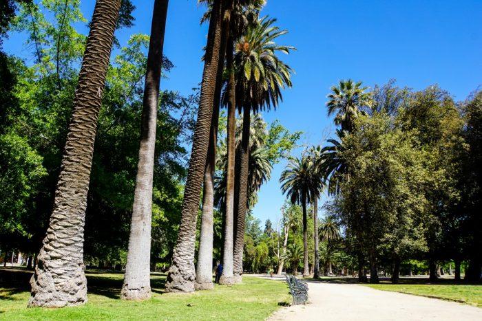 Hoge bomen in Parque Quinta Normal in Santiago de Chile, Chili