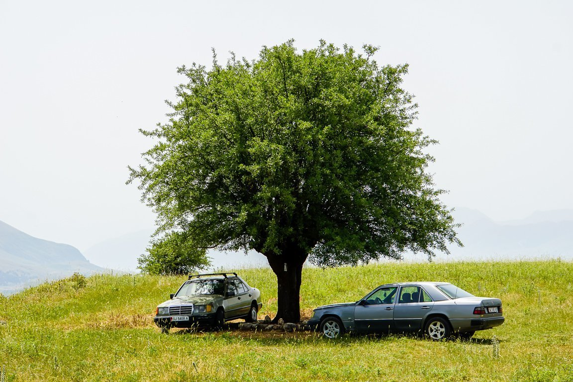 Mercedessen onder boom, Albanië