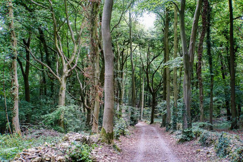 Bossen in de Cotswolds, Engeland
