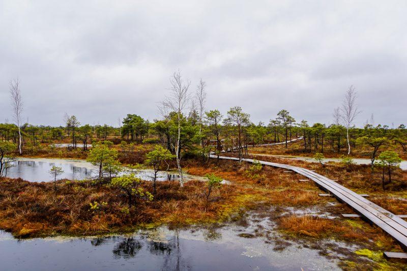 Dagtrips vanuit Riga - Kemeri National Park 2
