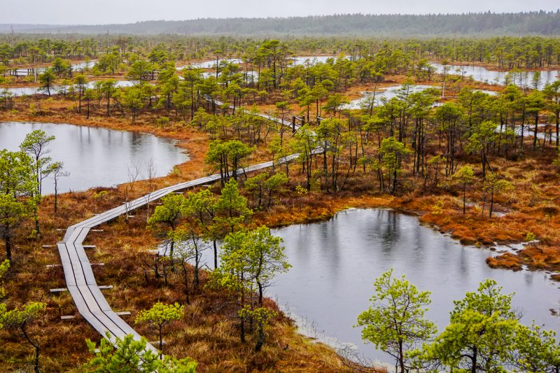 Dagtrips vanuit Riga - Kemeri National Park