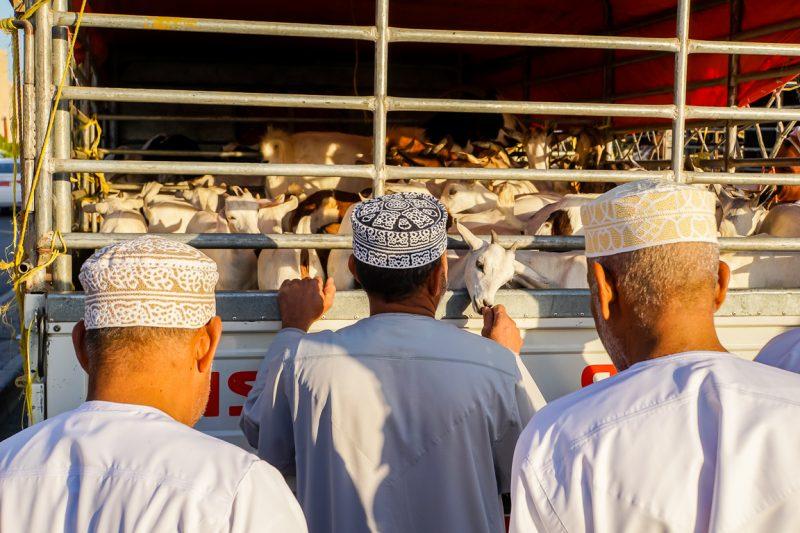 Geitenmarkt van Nizwa in Oman-3