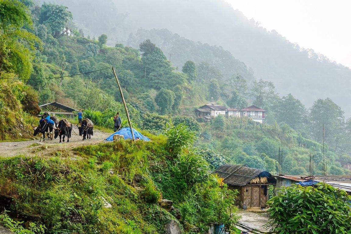 Het platteland van Sikkim, India