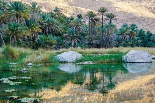 Palmbomen bij Wadi Bani Khalid in Oman