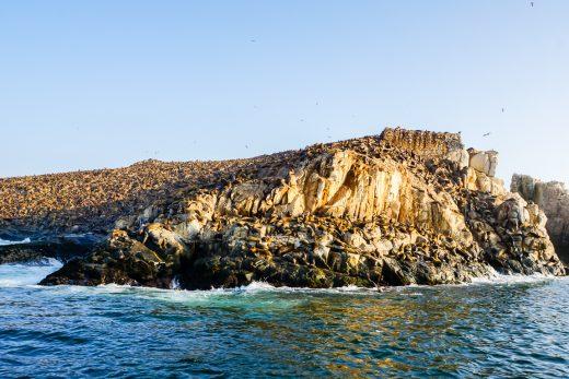 Rots vol met zeeleeuwen op de Islas Palomino bij Lima, Peru