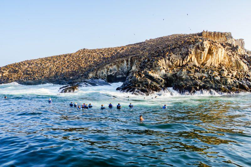Zwemmen tussen de zeeleeuwen bij de Islas Palomino bij Lima, Peru