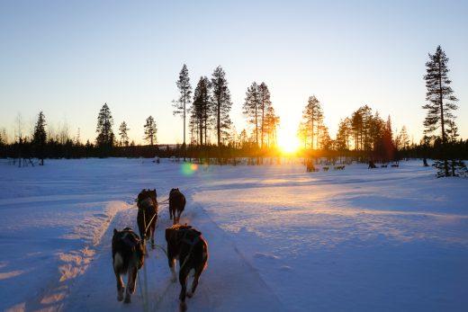 Huskytocht in Kiruna in Zweeds Lapland (5)
